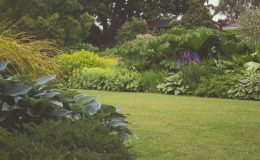 Tuinontwerpers aan het woord - Dé tuintrends van 2020